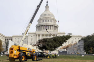 The 2016 U.S. Capitol Christmas Tree arrives to the West Lawn of the U.S. Capitol Building in Washington, Monday, Nov. 28, 2016, from the Payette National Forest in Idaho. (AP Photo/Andrew Harnik)